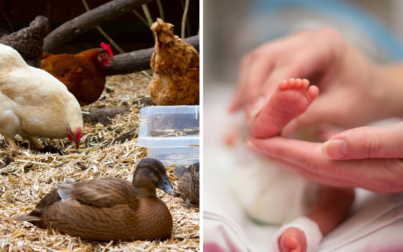 The Left: Chickens and Ducks Rate Higher Than Babies