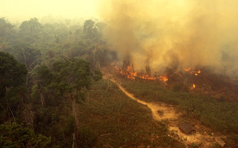 Everything You've Heard About the Amazon Fires Is Wrong